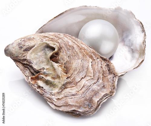 Leinwandbild Motiv Oyster with pearl isolated.