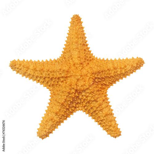 Caribbean starfish isolated on white background. - 76326676