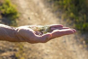 Cerales en la mano