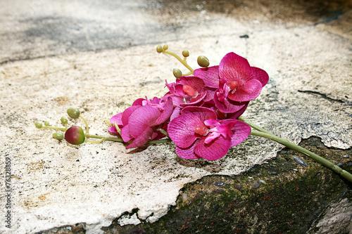 Quadro orchidee modern shabby chic blüte stein hochzeitskarte