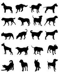 Black silhouettes of different breeds of dogs 2, vector