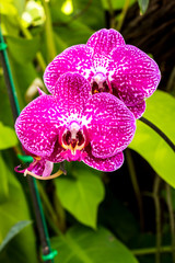 Orchid flower close up view.