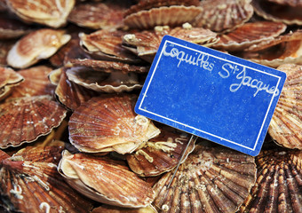 coquilles st Jaques
