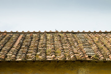 Old abandoned roof (Tuscany - Italy)
