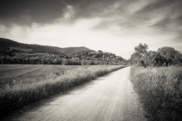 Pathway in tuscany countryside - toned image