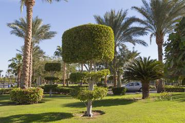 Decorative lawn in Sharm el-Sheikh, Egypt