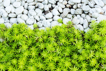 Green leaves with stone background.