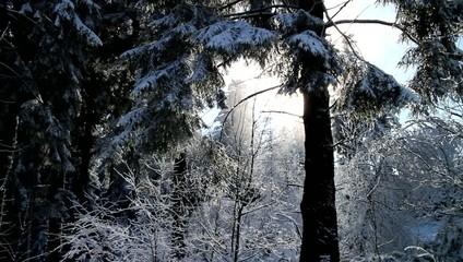 Kameraschwenk durch verschneite Winterlandschaft