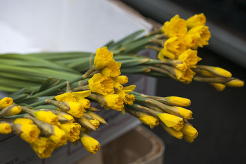lose up bunch of yellow daffodils on the dispaly for sale