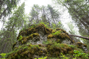 large stone in forest view from below