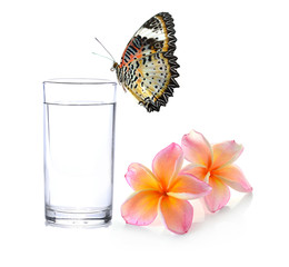 Glass of water and black and white Tropical flowers frangipani (