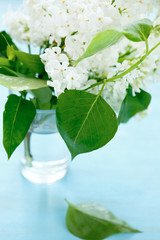 Lilac with green leaves in a glass