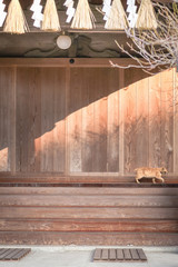 Ginger Cat in a Japanese temple