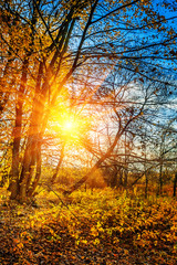 sunset in leafless autumn forest instagram stile