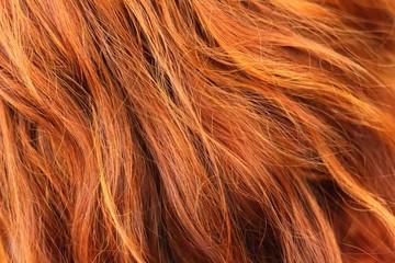 Wavy gold hairs of a beautiful women