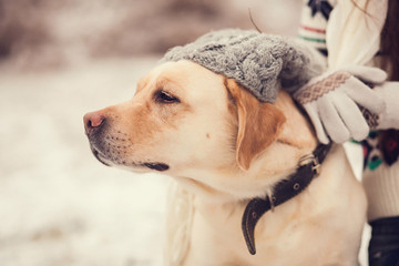 Portrait of a cute  labrador сlose-up