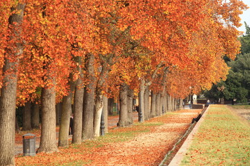 Toscana,Lucca passeggiata lungo le Mura.