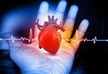 Human Heart  in hand.