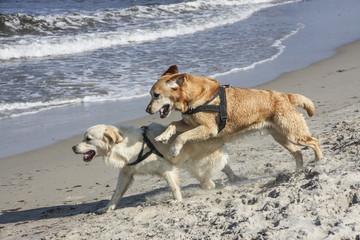 Hunde am Wasser