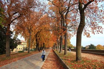 Toscana,Lucca,passeggiata lungo le Mura.