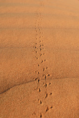 Traces on the sand in desert