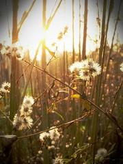 Sole e piante