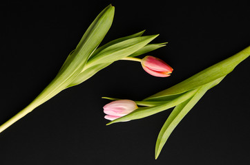 a pair of tulips reaching for each other