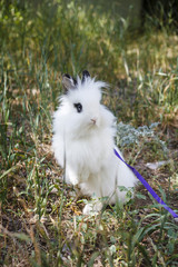 decorative white rabbit on walk