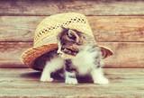 Fototapeta Ciekawski kociak i kapelusz