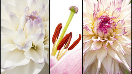 Collage of flowers in lila white