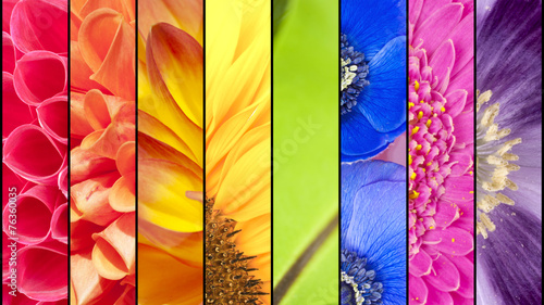 Staande foto Textures Collage of flowers in rainbow colors