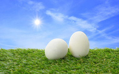 White eggs on field and blue sky sun rise