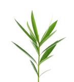 Green leaves on white - 76364481