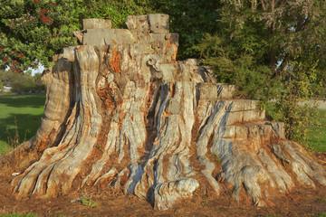 Baumstumpf am Totaranui Campground