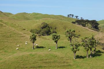 Landschaft am Cape Farewell