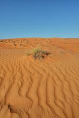 Sand desert landscape pattern with bush, Wahiba Sands, Oman