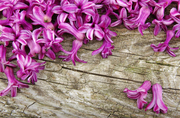 flower on wood