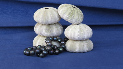 Six skeletons of sea urchins and black pearls