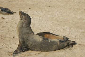 Sea Lion Sunbathing in Galapagos Islands