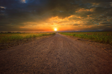 beautiful land scape of dusty road perspective to sun set sky wi
