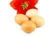 canvas print picture - Frische Braune Eier