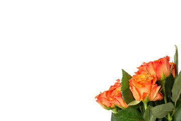 Bouquet of fresh orange roses with a large copyspace over white