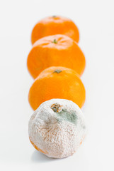 group of tangerines with mold