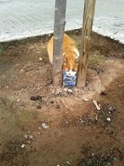 Gatito callejero bebiendo