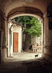 Sweet old Odessa yard with arch green tree and a cat
