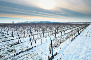 Vines in winter landscape