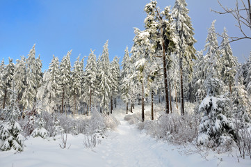 Winterwald am Ruppberg / Thüringen
