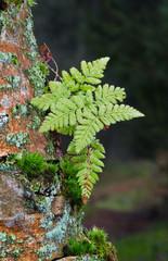 Pioneer vegetation on bark of dead tree