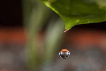 Water drop on a leave