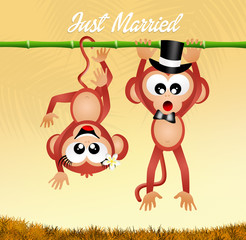 Wedding of monkeys